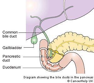The pancreatic and biliary stent the next diagram is a close up of the pancreas and the ducts or tubes that connect the pancreas with the gall bladder and duodenum small intestine ccuart Choice Image